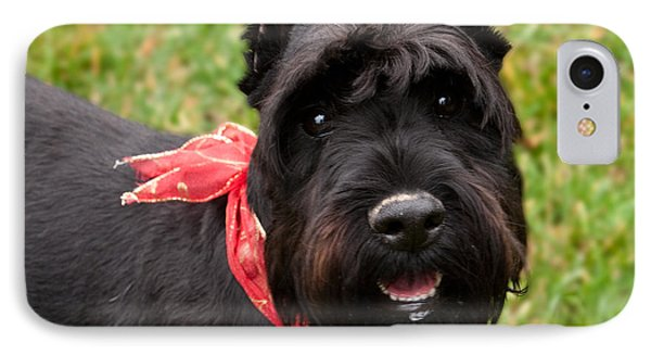 Black Schnauzer With Red Bow Smiling IPhone Case by Iris Richardson