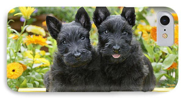Black Scotties IPhone Case