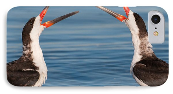 Black Skimmers IPhone Case by Avian Resources