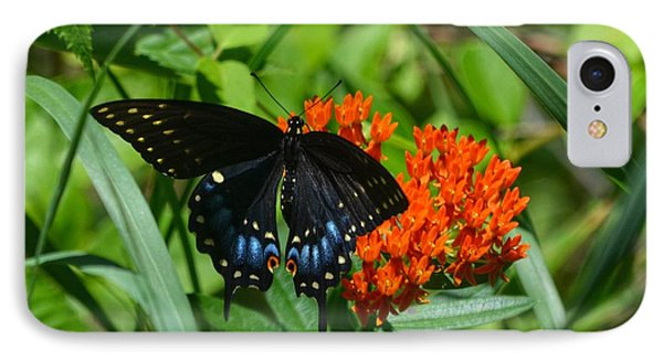 Black Swallow Tail On Beautiful Orange Wildlflower Phone Case by Peggy Franz