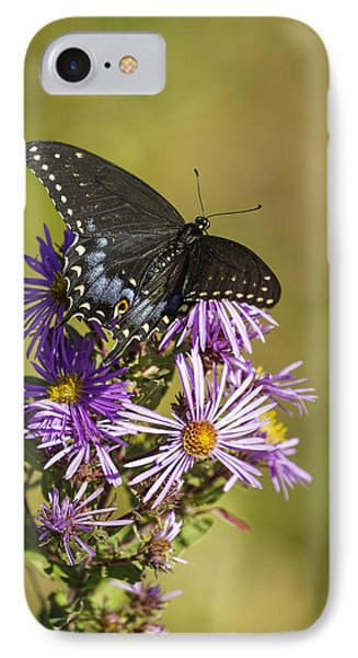 Black Swallowtail On Aster Flower 2 IPhone Case by Thomas Young