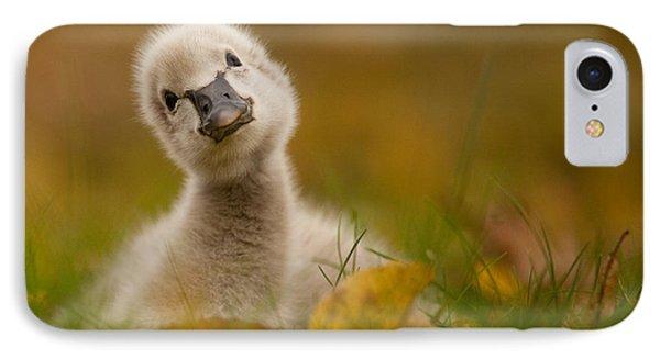 Black Swan Baby IPhone Case