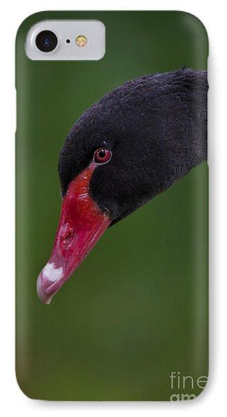 Black Swan Series - 3 IPhone Case by Heiko Koehrer-Wagner