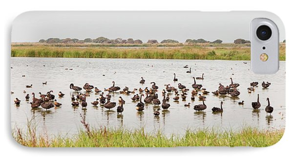 Black Swans And Australian Shelduck IPhone Case