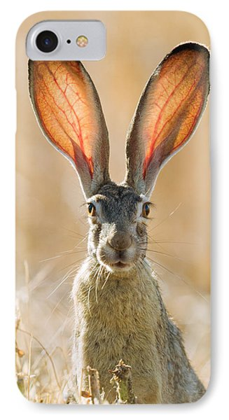 Black-tailed Hare Davis California IPhone Case