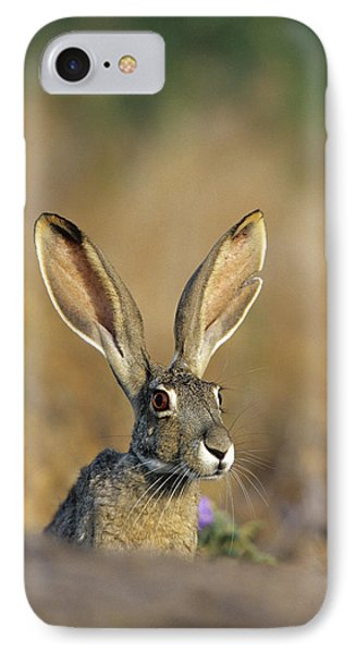 Black-tailed Jack Rabbit (lepus IPhone Case by Richard and Susan Day