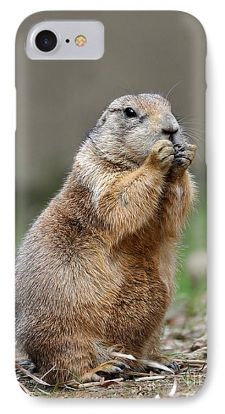 Black Tailed Prairie Dog IPhone Case by Paul Fearn