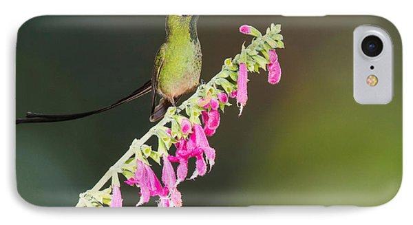 Black-tailed Train-bearer Hummingbird Phone Case by Dan Suzio