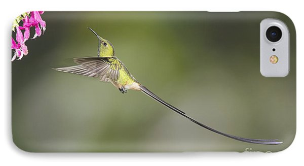 Black-tailed Trainbearer Hummingbird IPhone Case