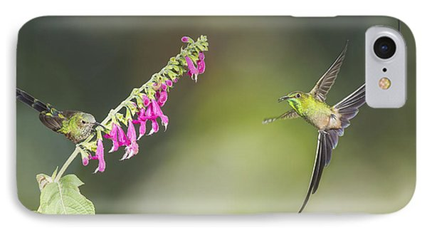 Black-tailed Trainbearer Hummingbirds IPhone Case