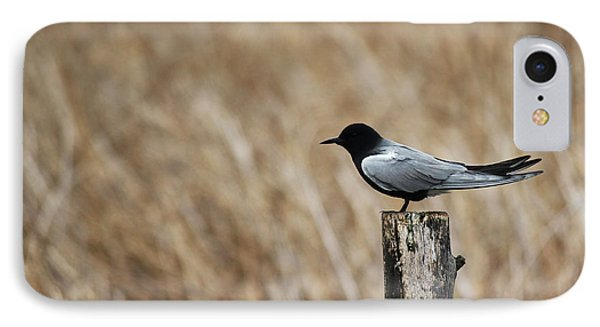 Black Tern IPhone Case by Ryan Crouse