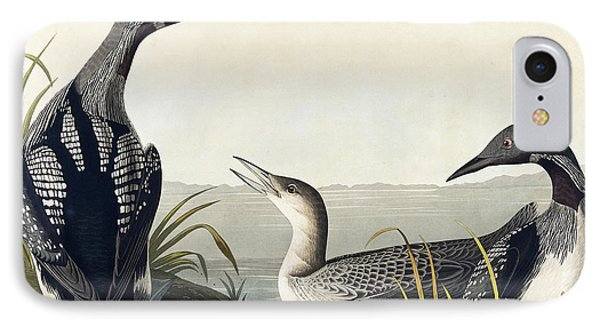 Loon iPhone 7 Case - Black Throated Diver  by John James Audubon