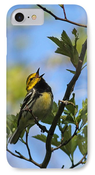Black-throated Green Warbler IPhone Case by Brian Magnier