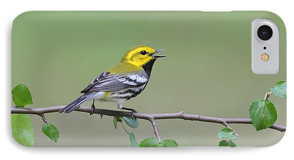 Black Throated Green Warbler Calling IPhone Case by Daniel Behm