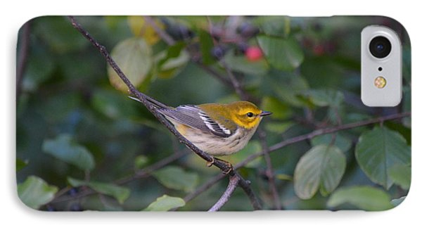 IPhone Case featuring the photograph Black-throated Green Warbler by James Petersen