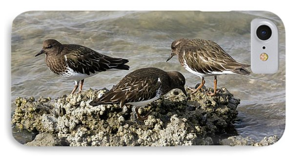 Black Turnstones Feeding IPhone Case by Bob Gibbons