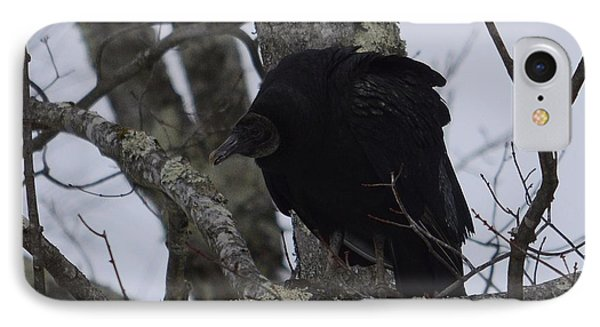 Black Vulture IPhone Case by Randy Bodkins