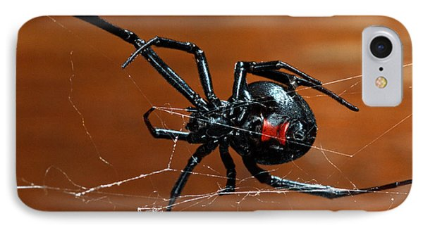 Black Widow Spider IPhone Case by Francesco Tomasinelli