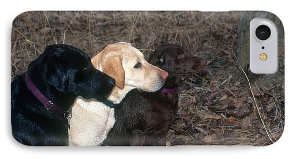 Black, Yellow And Chocolate Labs IPhone Case