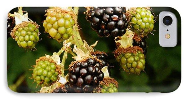Blackberries IPhone Case by VLee Watson