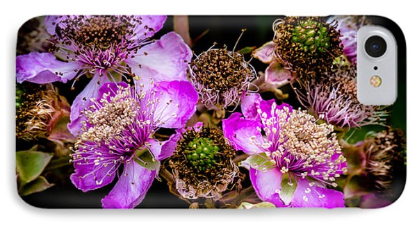 Blackberry Flower IPhone Case by Edgar Laureano
