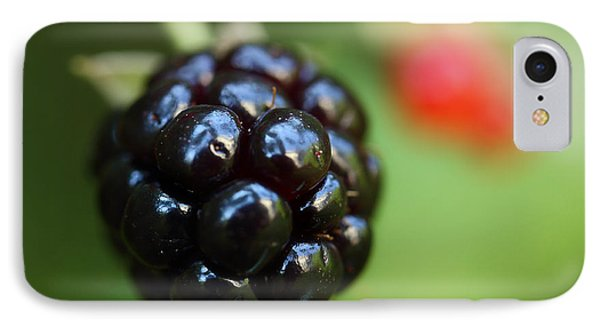 Blackberry On The Vine IPhone Case by Michael Eingle