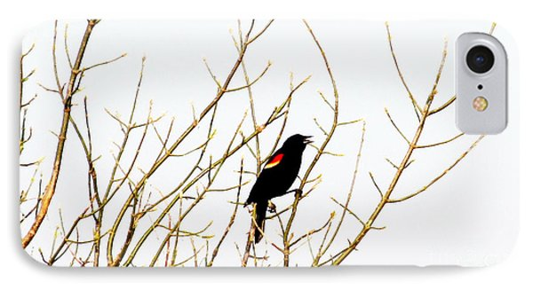 Blackbird Singing A Happy Tune Phone Case by Tina M Wenger