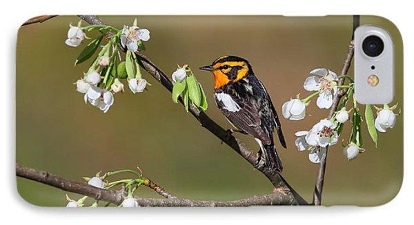 Blackburnian Warbler IPhone Case by Daniel Behm