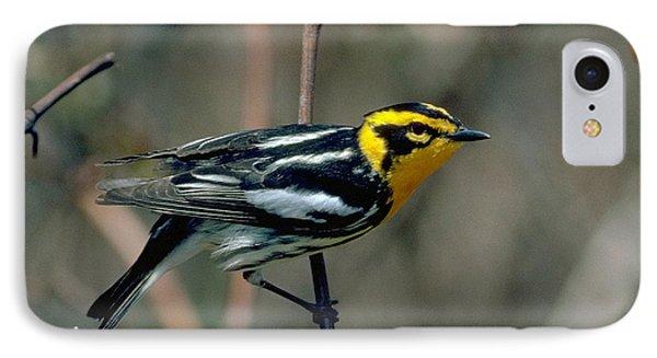 Blackburnian Warbler IPhone Case by Doug Herr