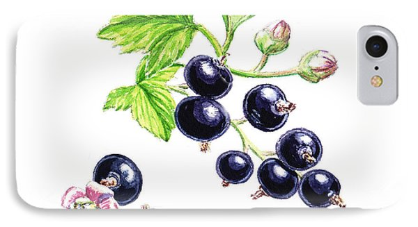 Blackcurrant Botanical Study IPhone Case by Irina Sztukowski