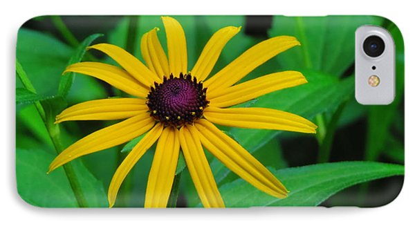Blackeye Susan IPhone Case by Kathy Long