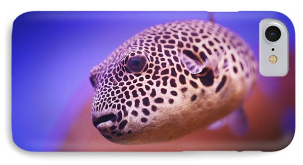 Blackspotted Puffer Arothron IPhone Case by Reynold Mainse