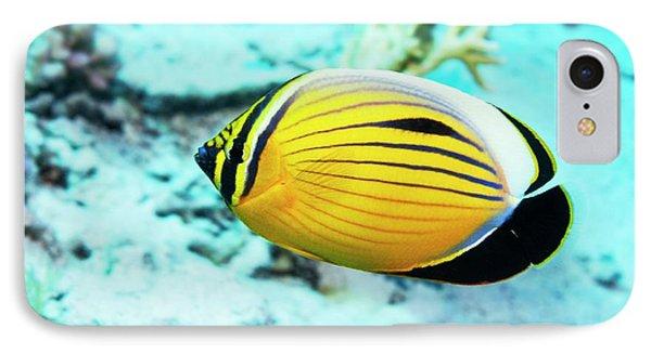 Blacktail Butterflyfish IPhone Case by Georgette Douwma