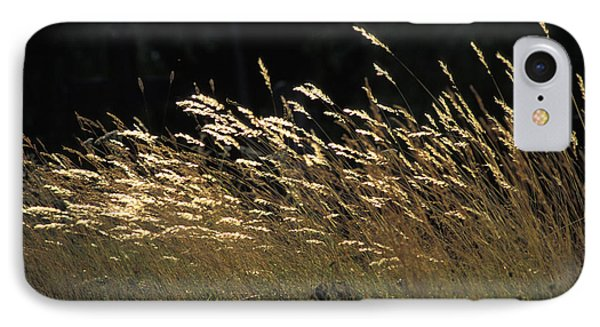 Blades Of Grass In The Sunlight Phone Case by Jim Holmes