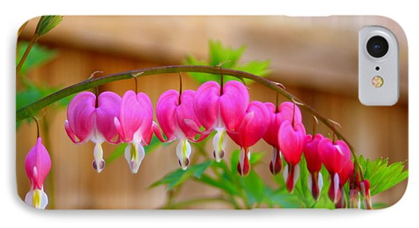 IPhone Case featuring the photograph Graceful Arch Of Bleeding Heart by Patti Whitten