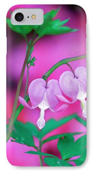 Bleeding Hearts Connecting In Garden IPhone Case by Jaynes Gallery