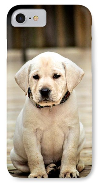 Blond Lab Pup IPhone Case by Kristina Deane