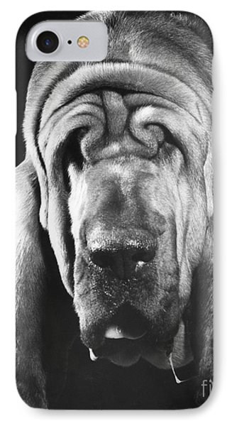 Bloodhound Portrait Phone Case by ME Browning