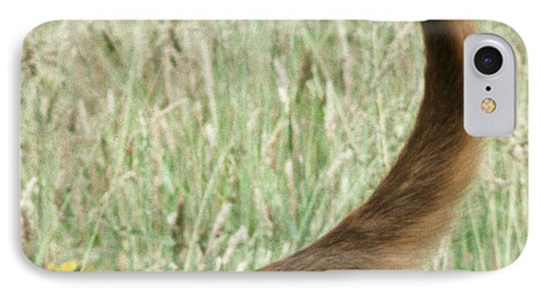 Bloodhound Tail IPhone Case by John Daniels