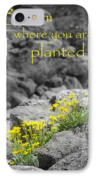Bloom Where You Are Planted IPhone Case by Debbie Karnes