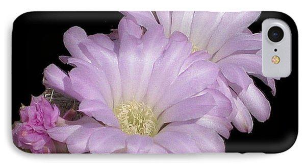 Blooming Arizona Cactus No. 1 IPhone Case by Merton Allen