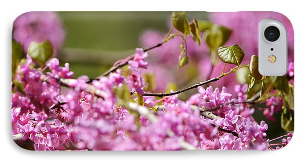Blooming Redbud Tree Cercis Canadensis Phone Case by Rebecca Sherman