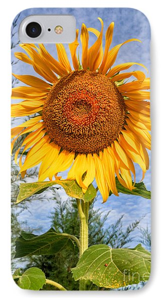 Blooming Sunflower V2 IPhone Case by Adrian Evans