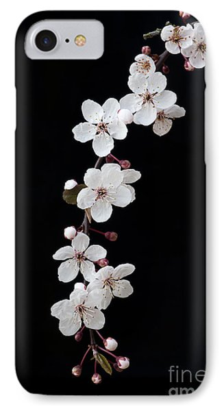 Blossom On Black IPhone Case by Tim Gainey