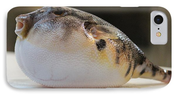 Blowfish 2 IPhone Case by Cynthia Snyder