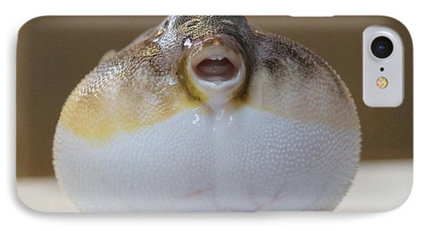 Blowfish IPhone Case by Cynthia Snyder