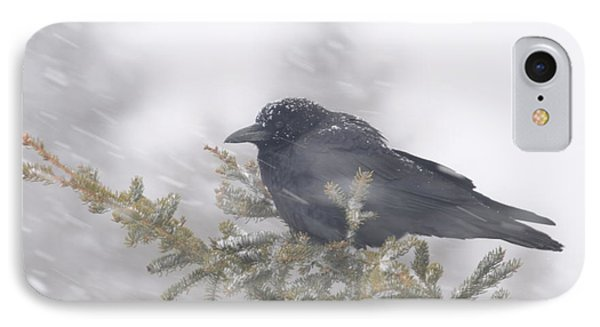 Blowin' In The Wind - Crow Phone Case by Sandra Updyke