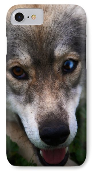 Blue And Brown Eyed Husky - Series II IPhone Case by Doc Braham