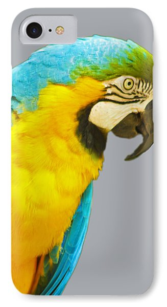 Blue And Gold Macaw IPhone Case by Bill Barber