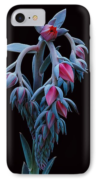 Blue And Pink Succulent IPhone Case